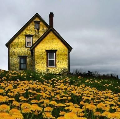 canada-spring-flowers.jpg