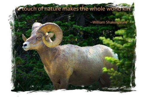 Ram - Shakespeare Quote re Nature