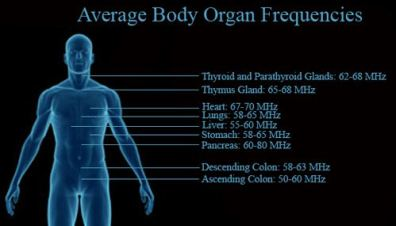 Frequencies of Organs