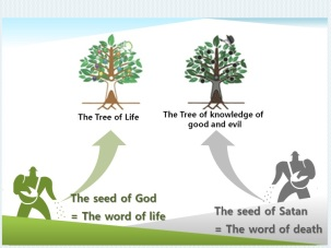 Tree Life - Tree Knowledge Good & Evil