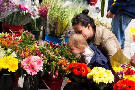 Toronto Flowers